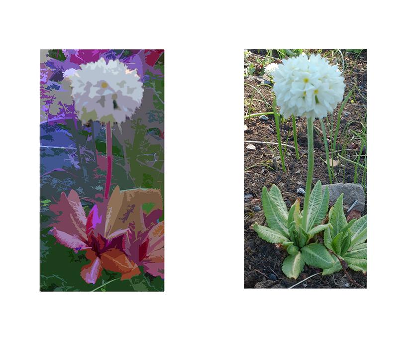 blomst22